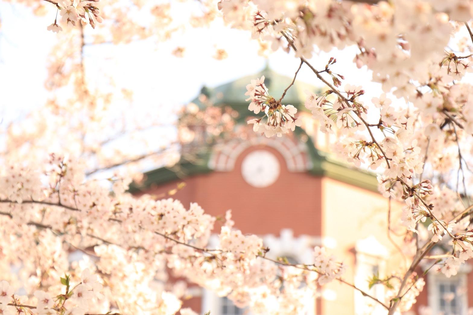 深谷駅と桜