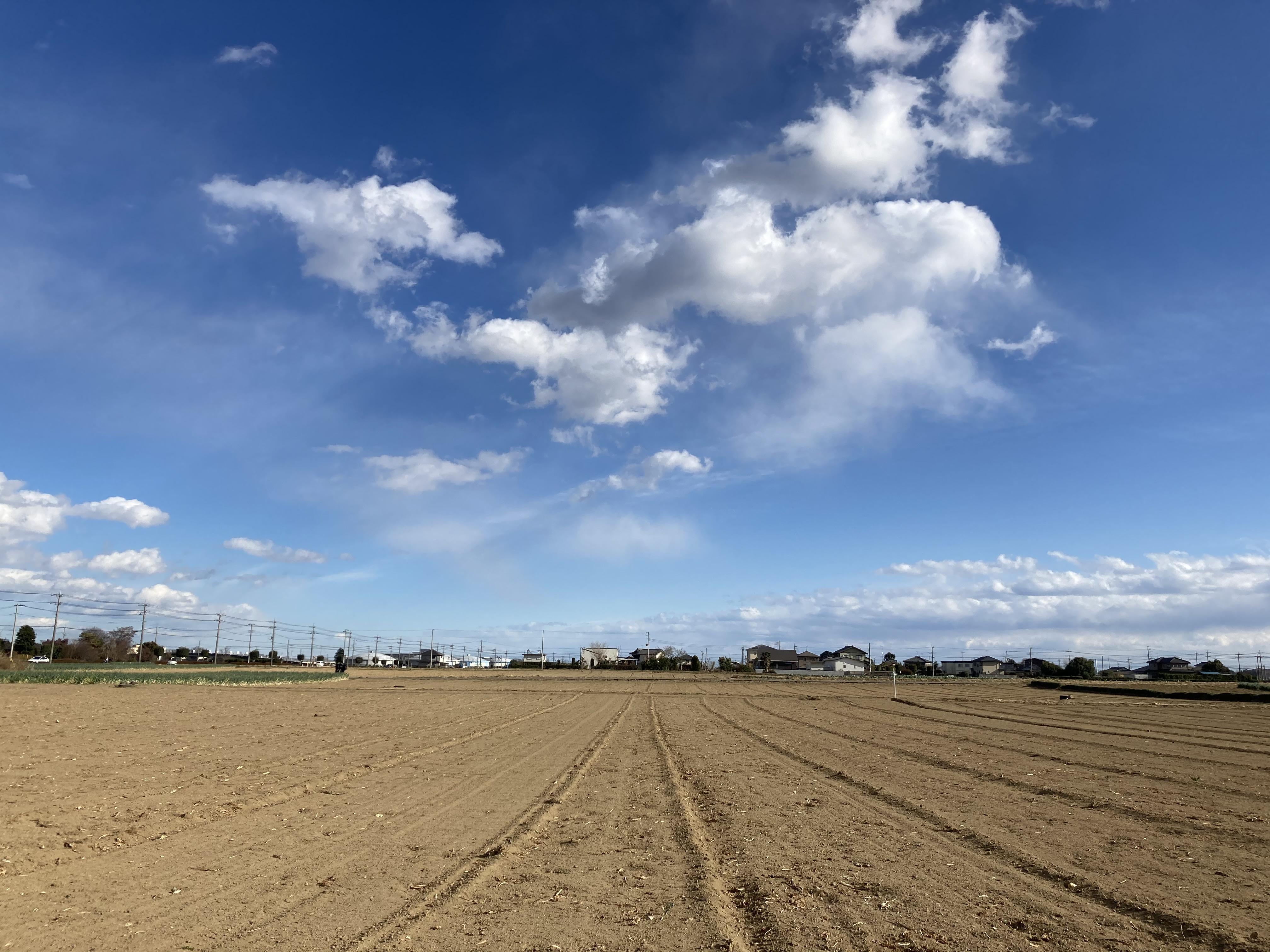 深谷市の整地された農地と青空