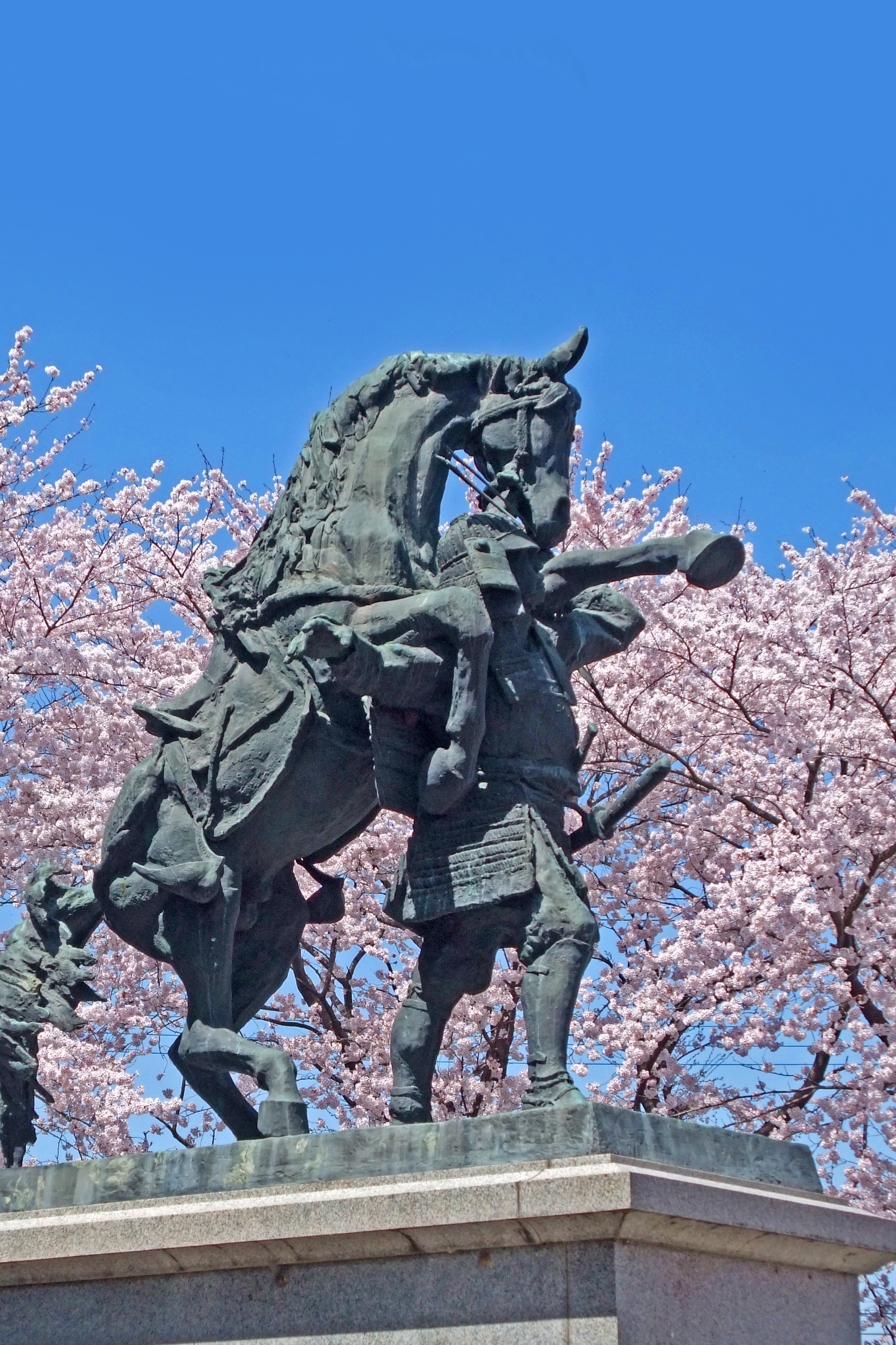 畠山重忠 銅像(桜)