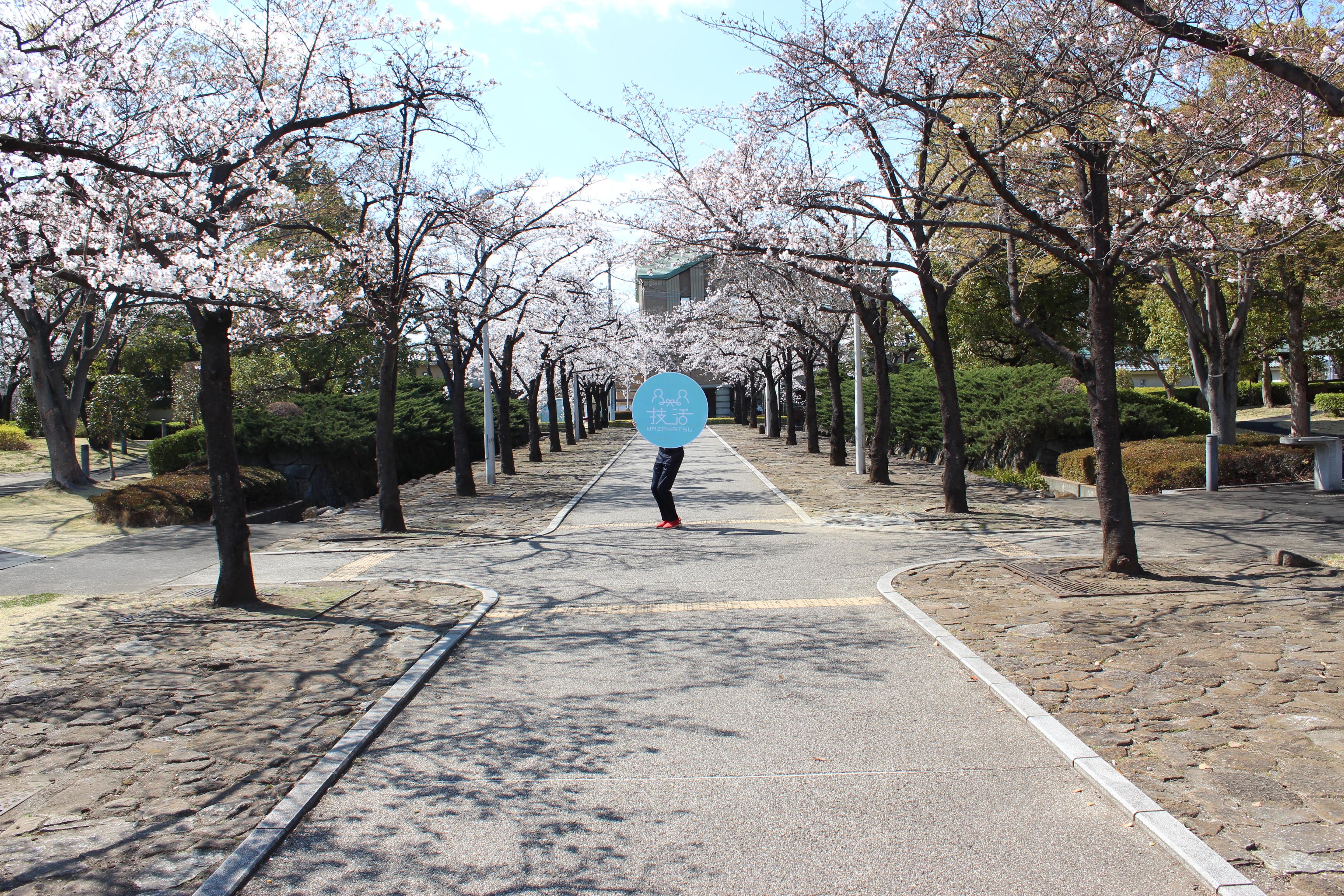 技活くん×深谷城址公園桜