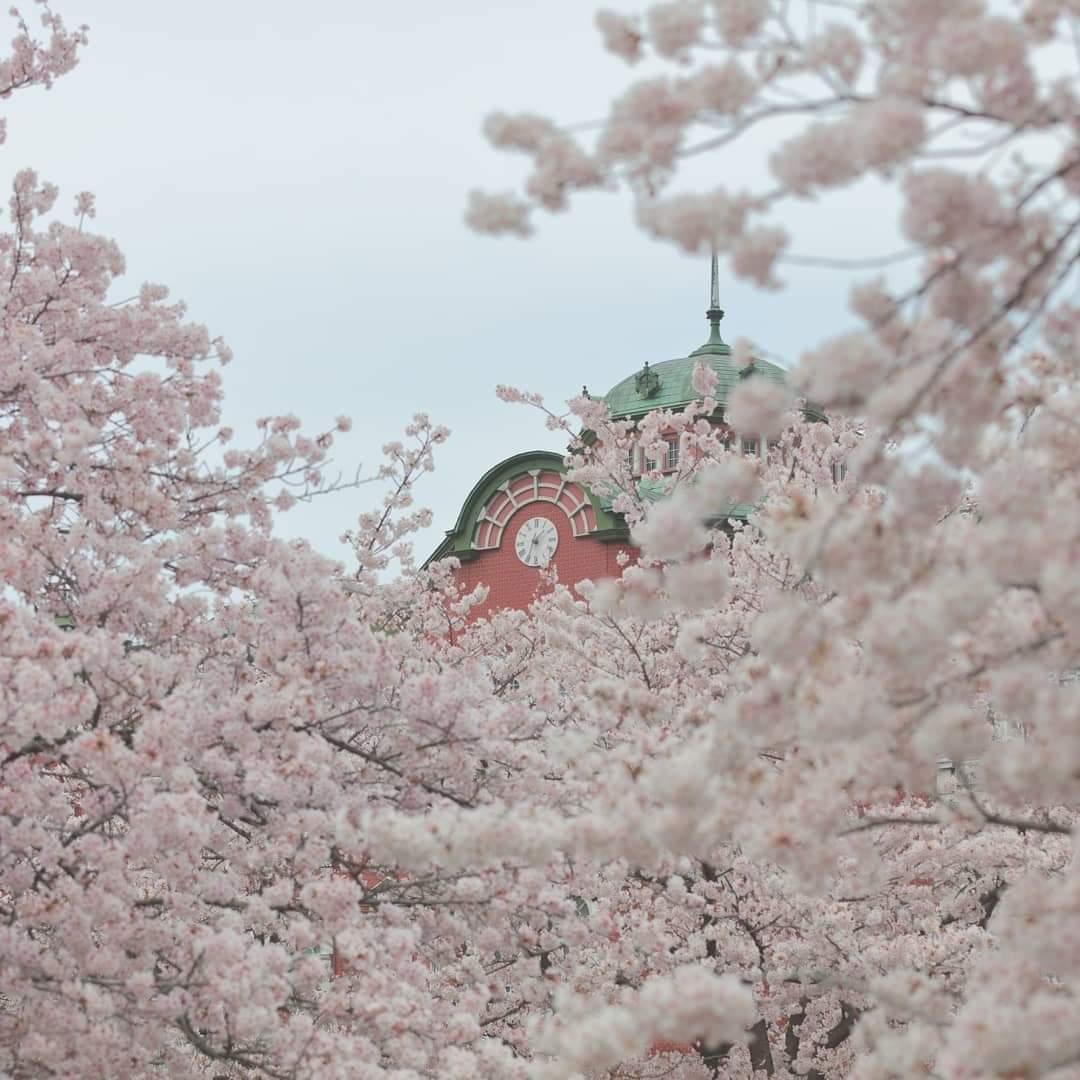 桜と深谷駅