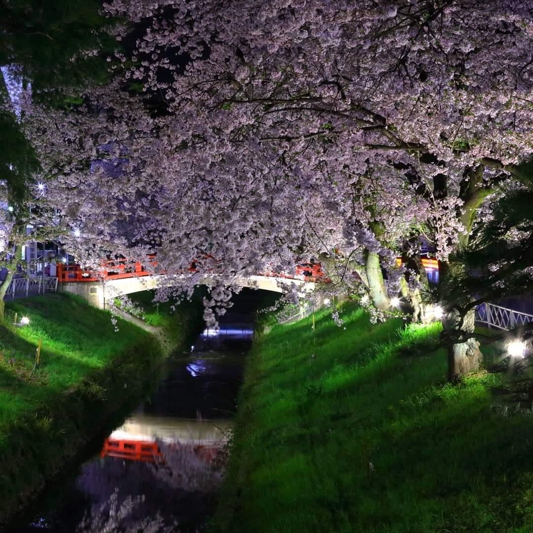 桜と滝宮橋