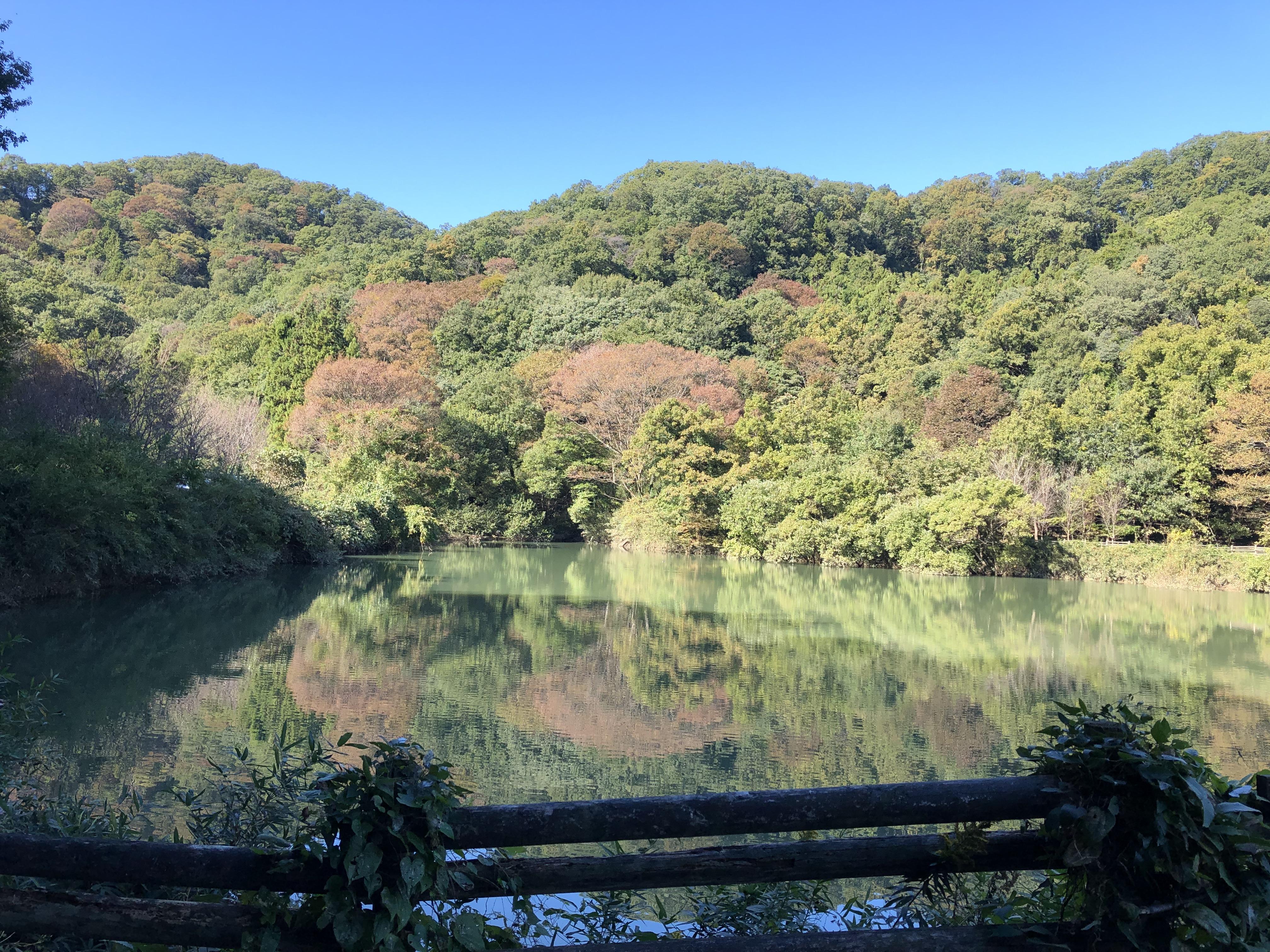 鐘撞堂山の霧ヶ谷津池