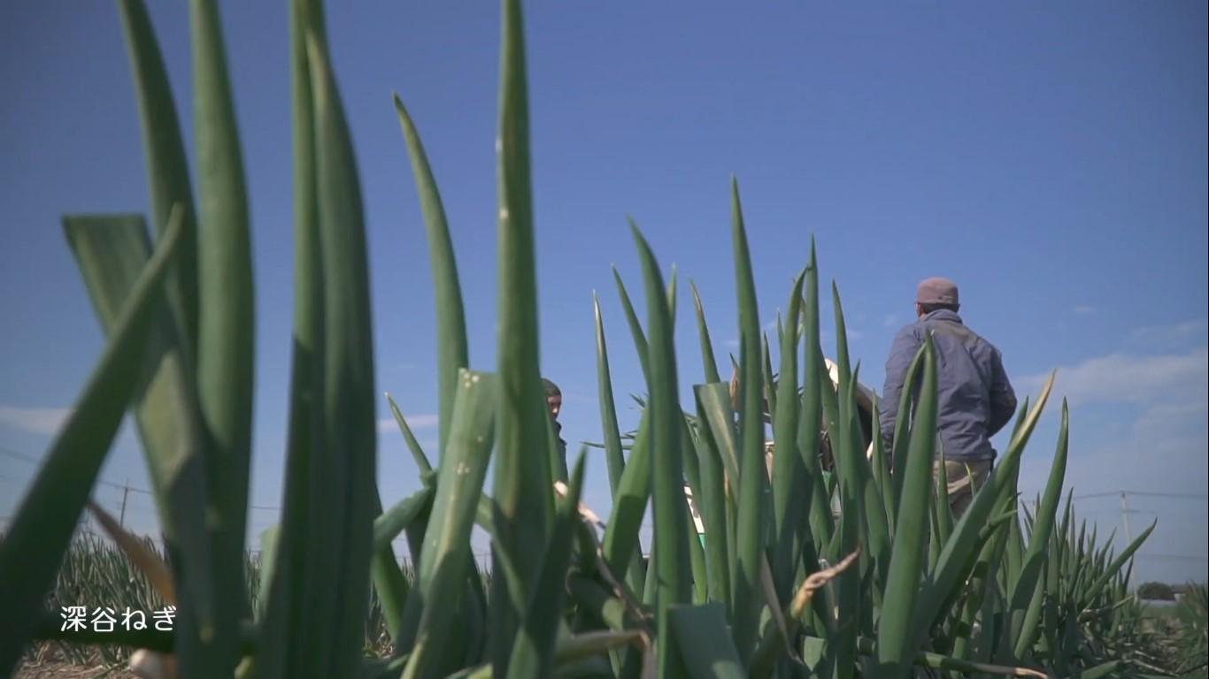 深谷の農業 深谷ねぎ ねぎ畑と生産者