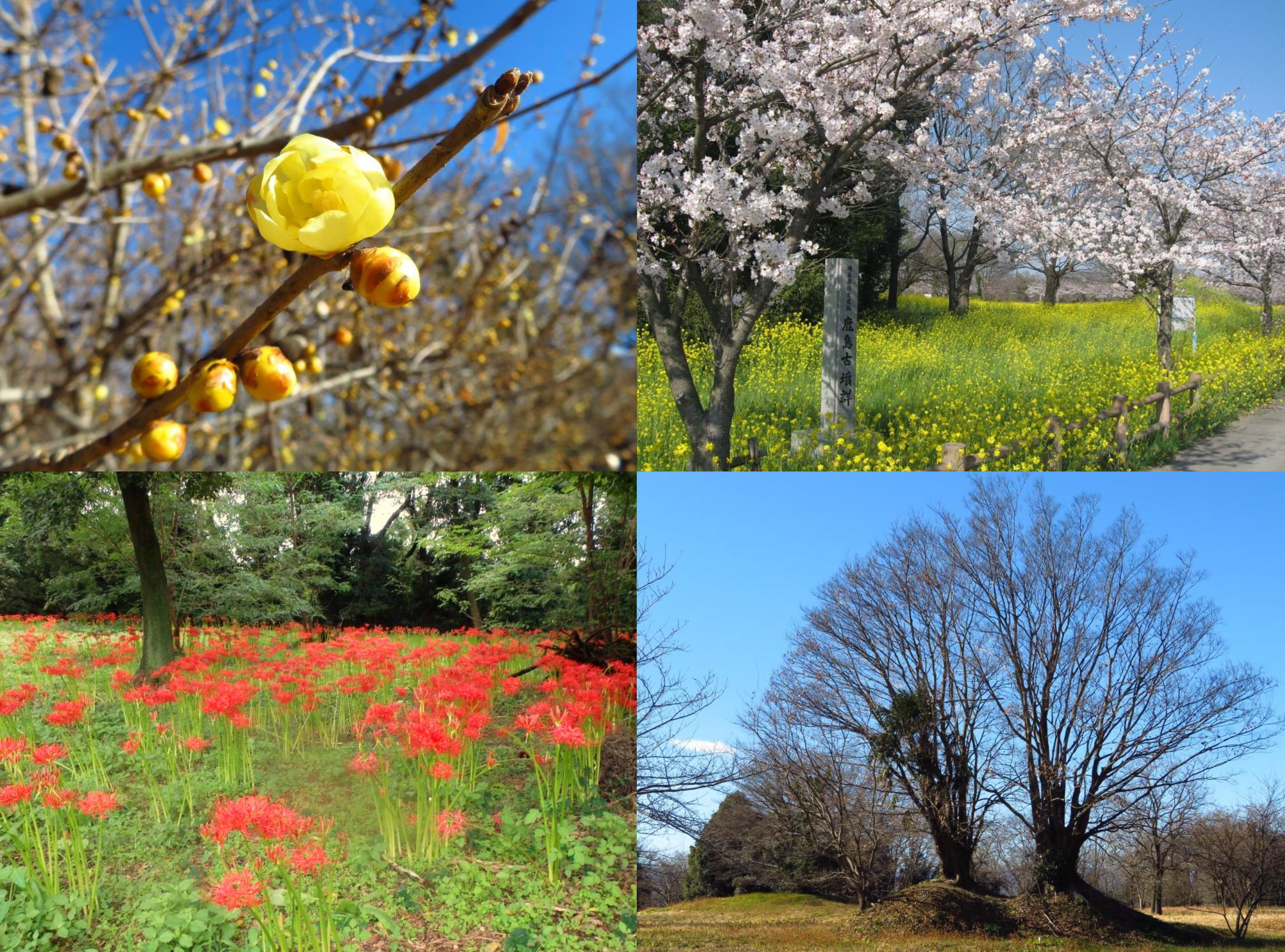 鹿島古墳群の四季