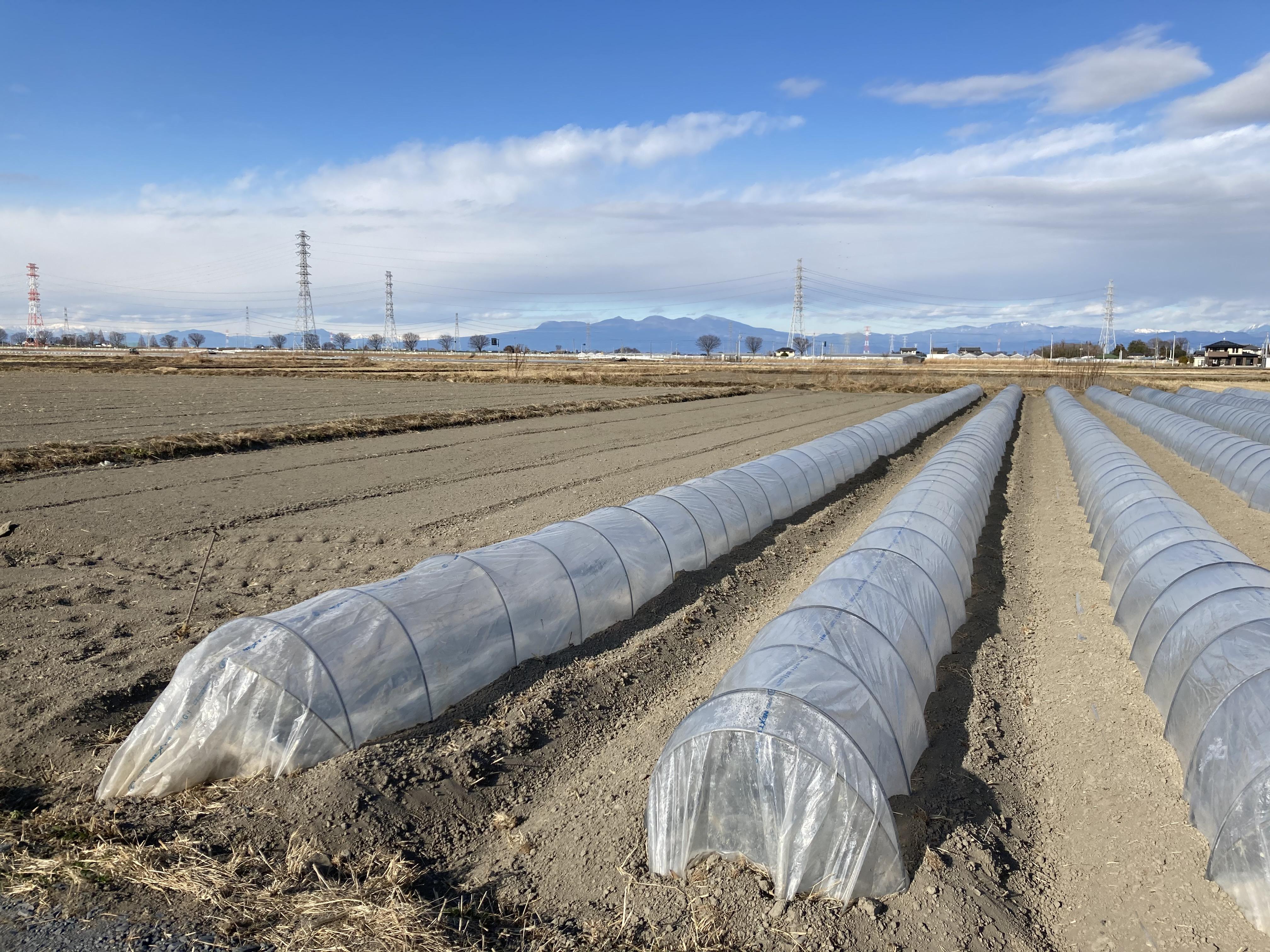 深谷市の農業 トンネル栽培 02